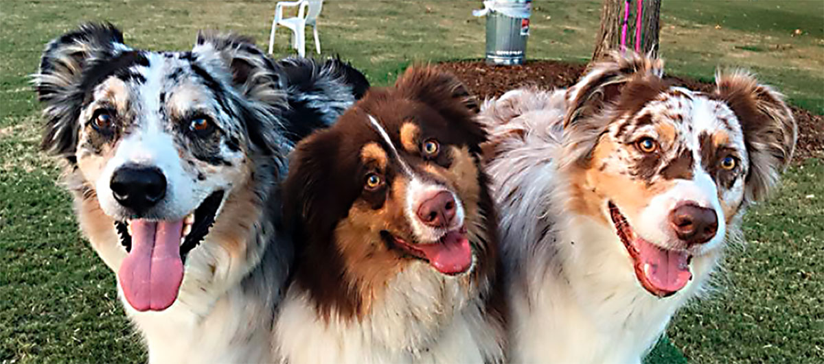 Dogs of the Sepulveda Basin Off-leash dog park